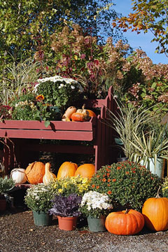 retail garden center nursery display