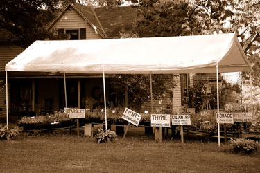 herbs for sale at an old Kentucky home