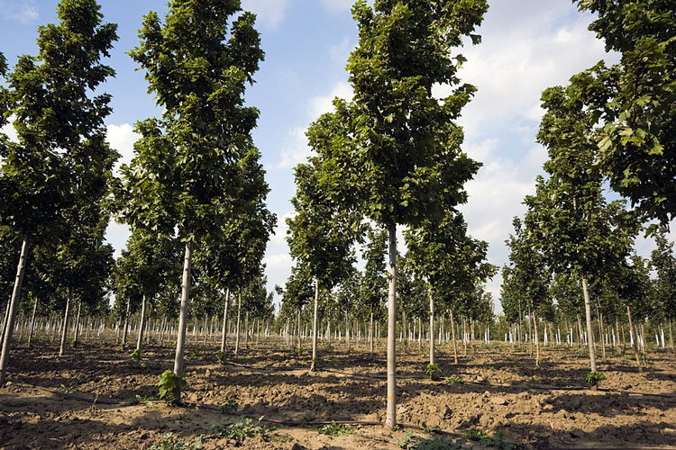 Tree Nursery Near Springfield Illinois