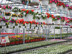 nursery greenhouse design