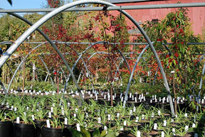 plant pots in greenhouse frame