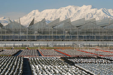 plant nursery greenhouse in Utah